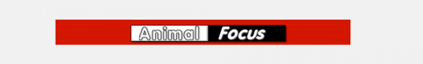 http://animalfocus.com/indexfr.html