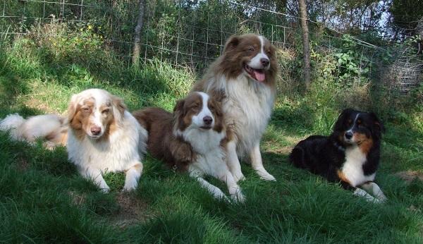 5 ha de bois pour se promener avec les chiens