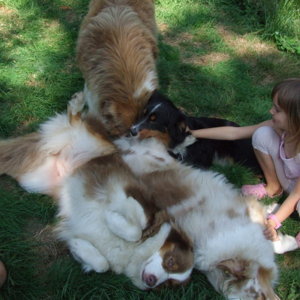 Les chiens avec notre plus jeune fille