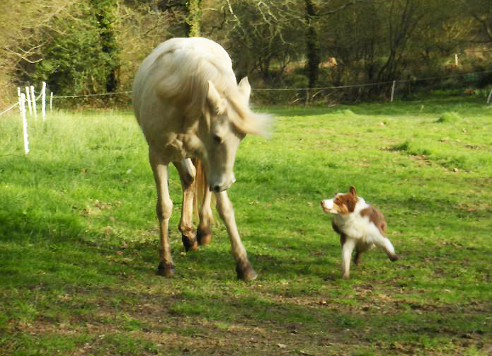 cheval & chien